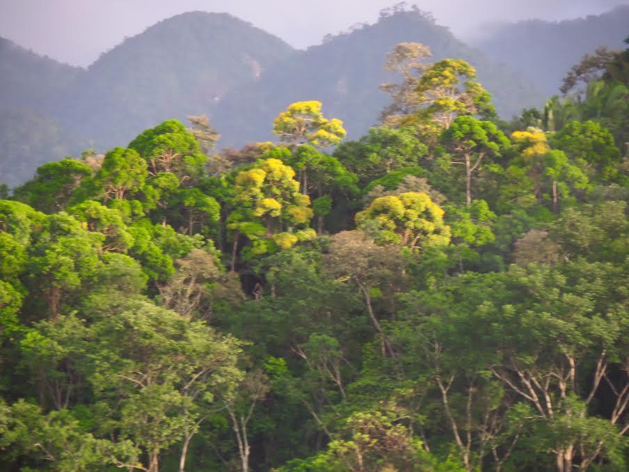 Rio Cangrejal Pico Bonita La ceiba Honduras